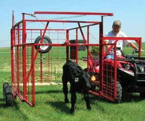 Calf Catcher cage on side of ATV with calf at front opening of catcher