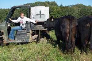 Carey sitting in utility vehicle operating the feeder in the back with cattle in foreground